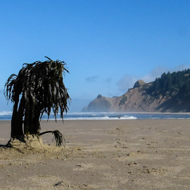Palm Tree on the Beach by Vonelle Swanson - Landscapes Beaches