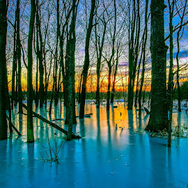 Frozen by Anna-Lee Nemchek Cappaert - Landscapes Forests ( winter, cold, ice, sunset, trees, forest, woods, swamp )
