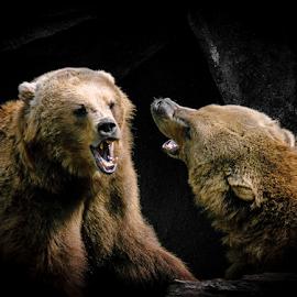 Bear talk by Gregg Pratt - Animals Other Mammals ( bear )