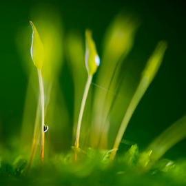 Alone! by Bharathkumar Hegde - Nature Up Close Other plants ( water, plant, green, drop, rain )