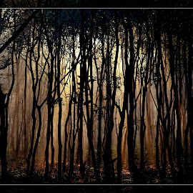 THE DARK FOREST by Kajal Suman Chatterjee - Landscapes Forests ( #dooars, #light, #black, #tree, light ray, #forest )