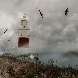 The Lighthouse. by Michael Dalmedo - Digital Art Things ( clouds, fog, lighthouse, seagulls, landscape )