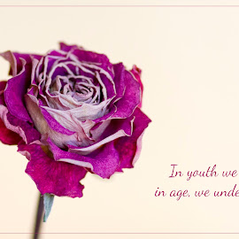 In youth... by Staci Ferrara - Typography Captioned Photos ( rose, quote, type, typography, flower )
