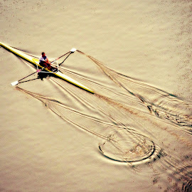 Early Morning Sculler by Tamsin Carlisle - Sports & Fitness Watersports ( water, scull, fitness, rowing, exercise, still, boat, morning, dubai, ripples, marina, oars, man, , color, colors, landscape, portrait, object, filter forge )