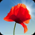 Poppy Field Live Wallpaper icon