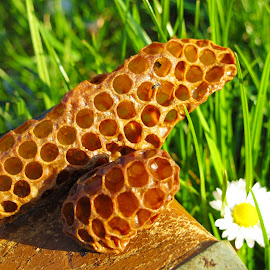 by Luna Sol - Nature Up Close Hives & Nests