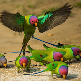 parrot group by Ricky Jaswal - Animals Birds