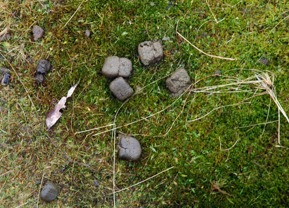 Image Result For Wombat Poop