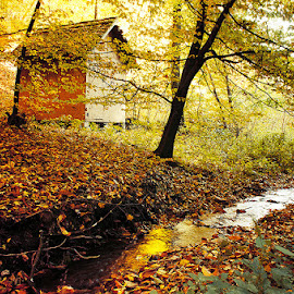Untitled by Zsolt Zsigmond - Landscapes Forests ( autumn, hidden, creek, fall, forest, house, light )