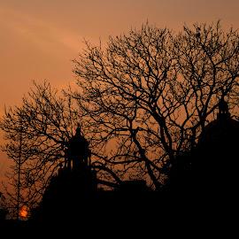 silhouette by Shamba Mukherjee - Abstract Light Painting ( tree, sunset, silhouette, dark, light )