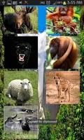 Screenshot of أصوات الحيوانات ٣
