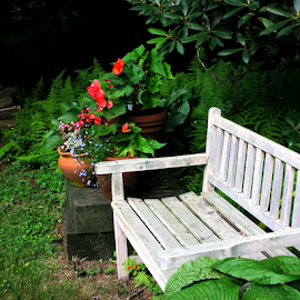Garden Bench by Jane Spencer - City,  Street & Park  Neighborhoods ( rhododendrum, bench, hostas, potted flowers, garden, back yard, weathered )