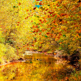 by Kathy Filipovich - Landscapes Waterscapes