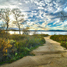 Pathway by Leon Dease - Uncategorized All Uncategorized ( water, hdr, pathway, lake skinner, path, trees, lake, sunshine, sunlight )