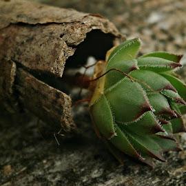 by Ksenija Glavak - Nature Up Close Other plants