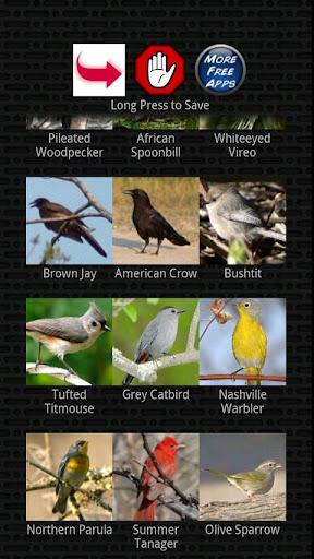 玩娛樂App|古典的な鳥の鳴き声免費|APP試玩
