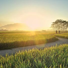 by Deden Mulyadi - Landscapes Sunsets & Sunrises