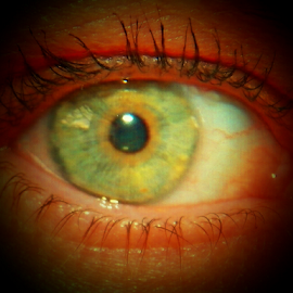 MY EYE by Donna Caster Wagoner - People Body Parts ( blue eyes, green eyes, eyes, eye,  )