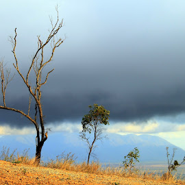 Ready for rain by Helen Beggs - Landscapes Cloud Formations ( clouds, dry, tree, trees, cloud, rain )