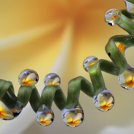 by Yustinus Slamet - Nature Up Close Natural Waterdrops (  )