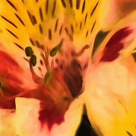Peruvian Lily 1 by Glenn Miller - Painting All Painting ( watercolor, lily, peruvian, yellow, alstroemeria, flower )