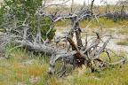 Yellowstone og omegn 169.jpg