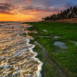 when waves meet moss by Budi Astawa - Landscapes Beaches ( sunset, wave, moss, beach )