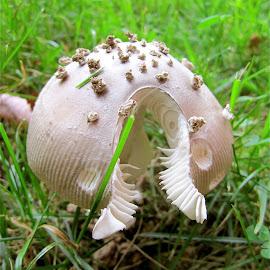 Pacman Mushroom by Tyrell Heaton - Nature Up Close Mushrooms & Fungi ( mushroom, pacman,  )