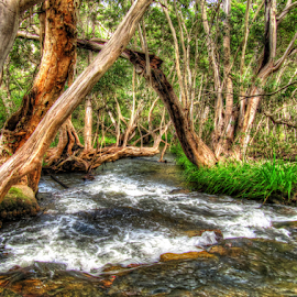 Davies Creek by Peter Keast - Landscapes Waterscapes ( water, camping, creek, rapids, trees )