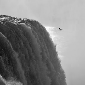 Soaring in the Mist by James Reil - Black & White Landscapes ( bird, seagull, black and white, niagara falls, waterfall, new york, mist )