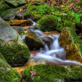 Little water by Siniša Biljan - Nature Up Close Water