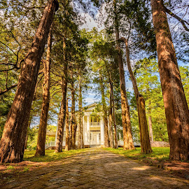 Rowan Oak Estate by Stephen Marshall - Buildings & Architecture Homes ( rowan oak, william faulkner, mansion, tree, path, oxford, cypress, william falkner, cobblestone, historic, estate )