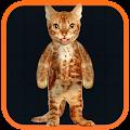 App Real Talking Cat APK for Windows Phone