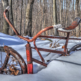 Outgrown, Abandoned and Lonely by Mike Roth - Transportation Bicycles (  )