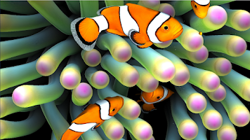 Screenshot of Nemo's Aquarium Live Wallpaper