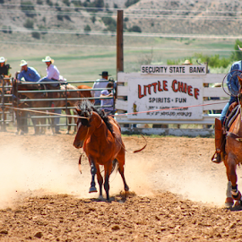 Catch'n A Bronc by Stacey Cannon - Sports & Fitness Rodeo/Bull Riding ( cowboy, rider, horse, wyoming, bronc, rodeo )