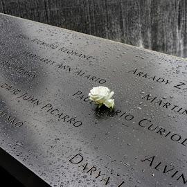 911 Memorial Flower by Paul Brady - Flowers Single Flower ( 911 memorial, new york city, flowers,  )