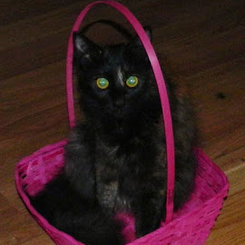 Easter bunny!?! by Bonnie Wilson - Animals - Cats Portraits ( cat, easter, basket, pink, easter basket )