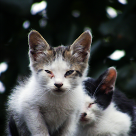 by Cosmin Stanciu - Animals - Cats Kittens ( cats, animals, sadness, little, kittens, portrait, eyes )
