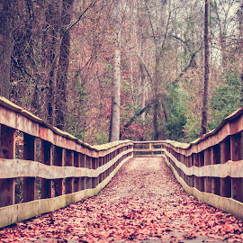 Leaves on the footbridge by Carol Plummer - City,  Street & Park  City Parks ( nature, park, trail, path, trees, bridge, leaves, city park )