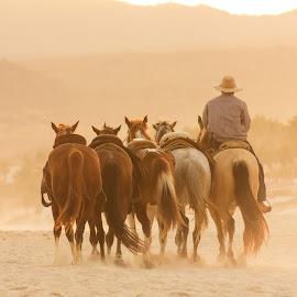 EL REGRESO by Alfonso Emmanuel Galina - People Portraits of Men ( men., caballos, playa )