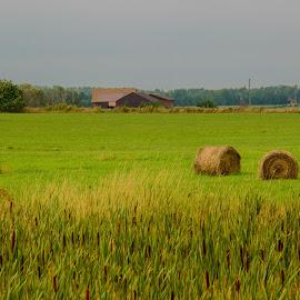 Suburb by Majid Uppal - Landscapes Prairies, Meadows & Fields ( field, suburbs, green, hay )