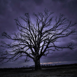 Dark Tree by Inspired  Foto - Nature Up Close Trees & Bushes ( #clouds, #photo, #dark, #cool, #tree )