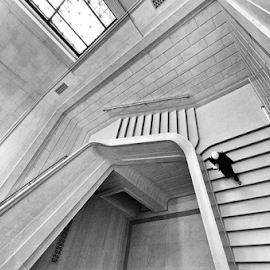 Descending by Eladio Gomes - Buildings & Architecture Other Interior ( dc, washington, gallery, washington monuments, staircase, art, national gallery of art, smithsonian, museum, painting,  )