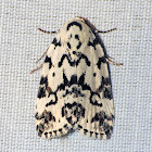 Hebrew Moth