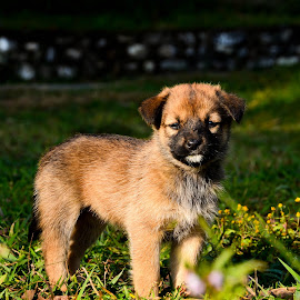 Adorable by Madhurima Das - Animals - Dogs Puppies