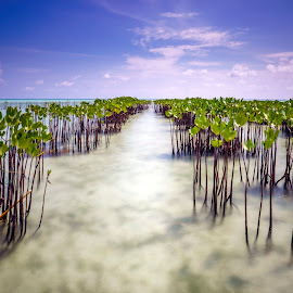 Mangroves by Kurnia Lim - Nature Up Close Other plants ( waterscape, seascape, landscape, mangrove )