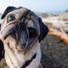 Hello by Pat Green - Animals - Dogs Portraits ( animals, chewy, chambers creek dog park, tacoma, places, wa )