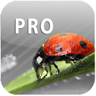 ColorUp Pro - Photo Editor icon