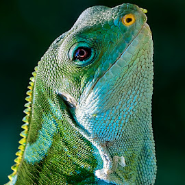 by Renos Hadjikyriacou - Animals Reptiles (  )